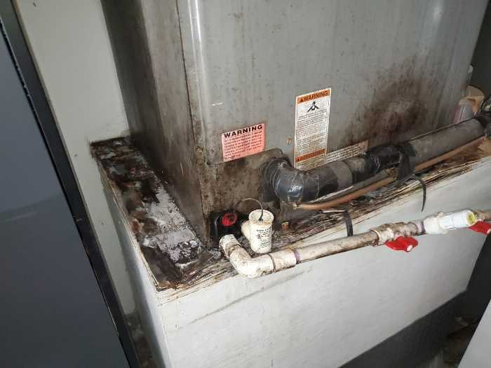Mold on Air Handler